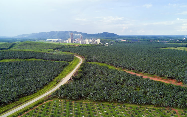 Aerial view of palm oil plantation in east Asia.
