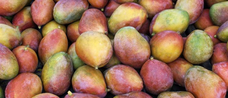 open dossier over Voedsel en landbouw
