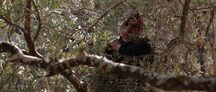 open dossier over Landbouwproducten uit bezette Palestijnse gebieden