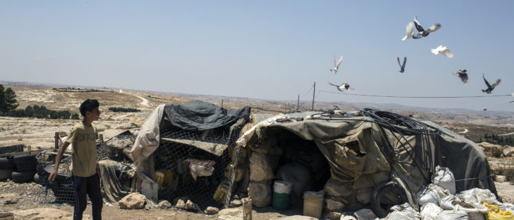 A boy attends to his pigeons, Susiya.