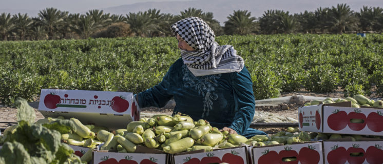 Paid workers from tiny village outside Nablus (mother and son) work a Palestinian owned farm in Jiftlek. The farm (when asked neighboring farmers and village council) is one of the most