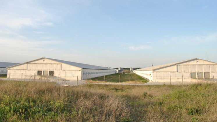 MHP chicken farm in Ukraine - Photo by SOMO.